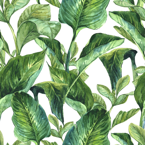Fototapeta Tropické listy, odstíny zelené na bílém pozadí, malované v akvarel, dekorace