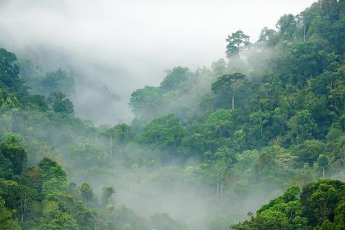 Fototapeta prostorový les, zvětšení interiéru, dekorace do obývacího pokoje, ložnice, odstíny zelené, mlha