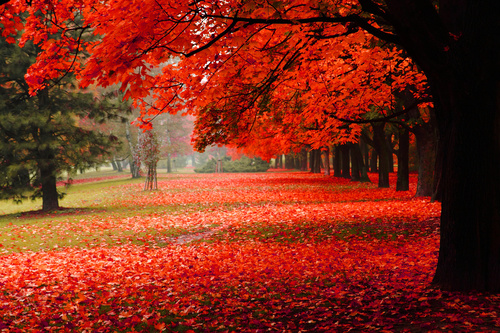 Fototapeta prostorový podzimní park, červené listy, podzimní stromy, dekorace