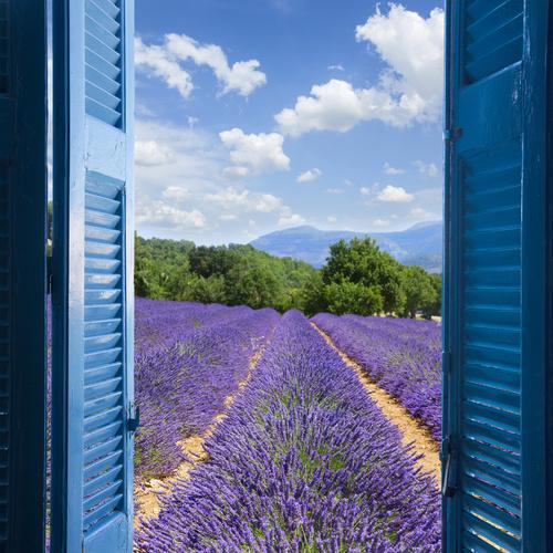 Fototapeta pohled z okna, levandule, hory, azurové pobřeží, modré okenice
