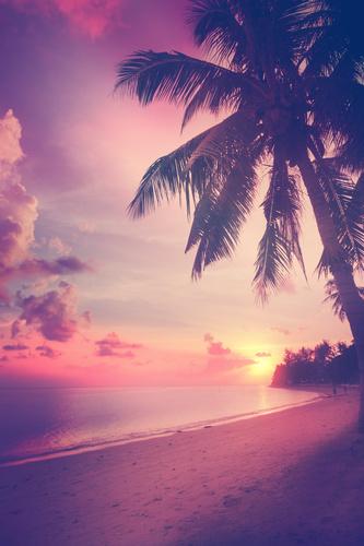 Fototapeta 3D západ slunce na pláži, kokosová palma, moře