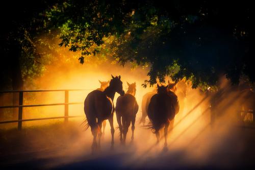Fototapeta koně, sluneční paprsky, stádo, stromy