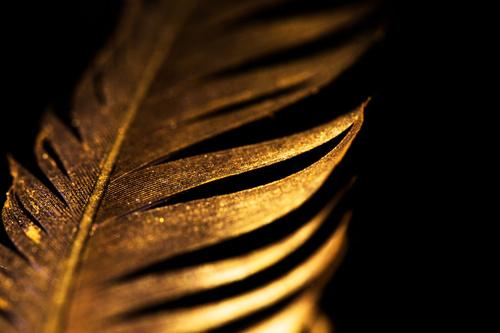 Fototapeta do ložnice, zlaté peří, černá, půvab