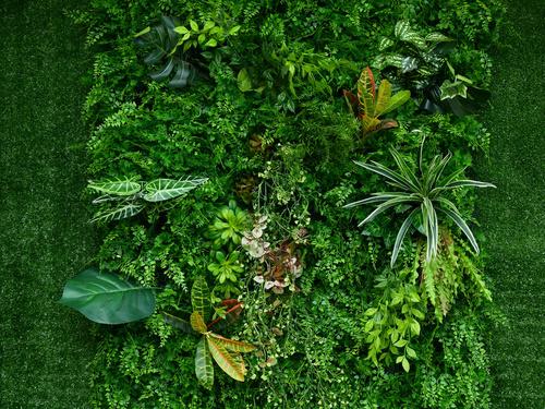 Fototapeta Zelená zeď