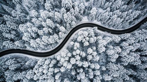 Zimní lesní tapety, stromy, sníh, cesta lesem, letecký pohled